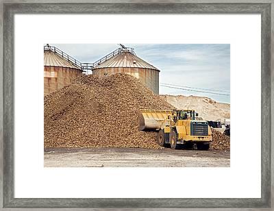 Harvested Sugar Beets Framed Print by Jim West