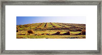 Harvested Wheat Field, Palouse County Framed Print by Panoramic Images