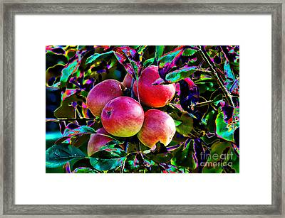 Harvesting Apples Framed Print by Mariola Bitner