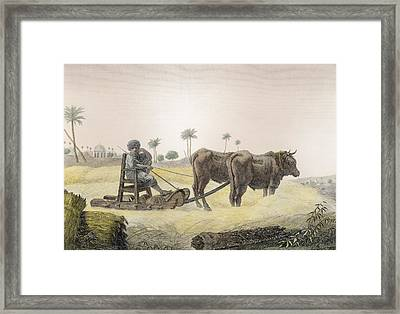Harvesting Corn, From Volume II Arts Framed Print