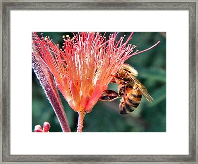 Framed Print featuring the photograph Harvesting by Deb Halloran