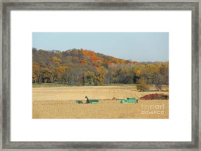 Harvesting Iowa Corn  Framed Print by Yumi Johnson