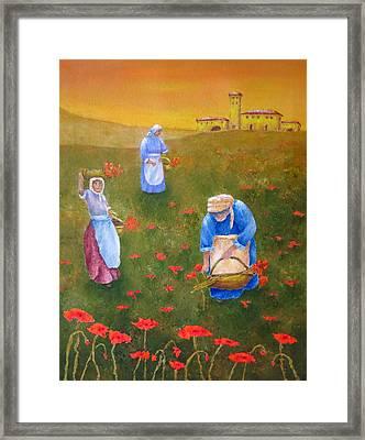 Harvesting Poppies In Tuscany Framed Print by Pamela Allegretto