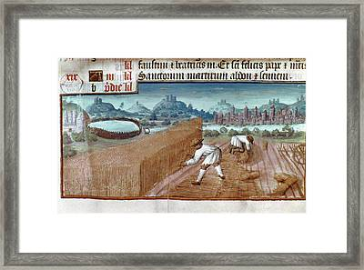 Harvesting Wheat In July Framed Print by Granger