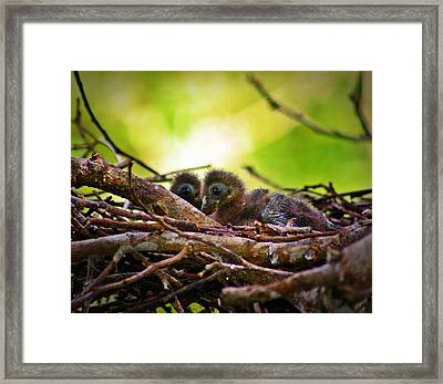 Framed Print featuring the photograph Hoatzin Hatchlings In The Amazon by Henry Kowalski