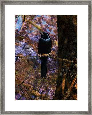 Framed Print featuring the digital art Haunting Grackle by J Larry Walker