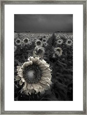 Haunting Sunflower Fields 1 Framed Print