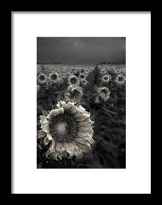 Featured Framed Prints
