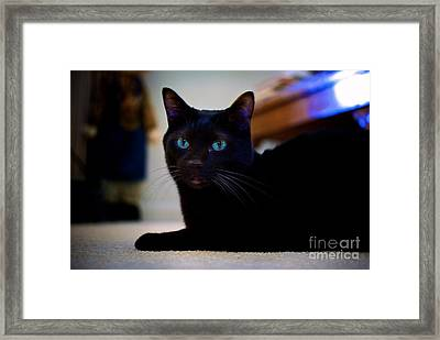Havana Brown Cat Framed Print