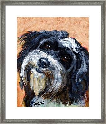 Havanese Dog Portrait Framed Print by Dottie Dracos
