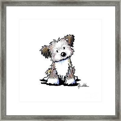 Havanese Puppy Framed Print by Kim Niles