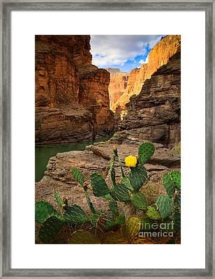 Havasu Cactus Framed Print by Inge Johnsson