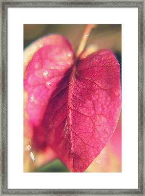 Have A Heart Framed Print by Laurie Search