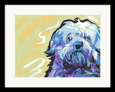 Havanese Framed Prints