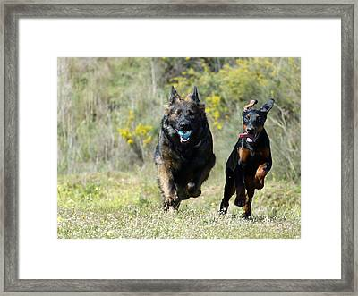 Framed Print featuring the photograph Have Fun And Run by Janina  Suuronen