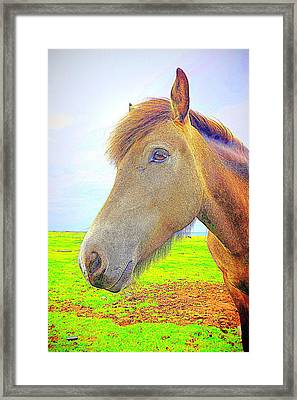 What Is Going On Inside Of The Horse  Framed Print