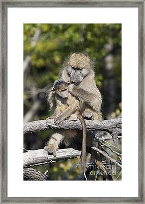 Framed Print featuring the photograph Have You Cleaned Behind Your Ears by Liz Leyden