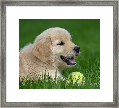 Having A Ball Framed Print