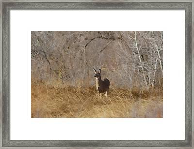 Having A Look Framed Print by Ernie Echols