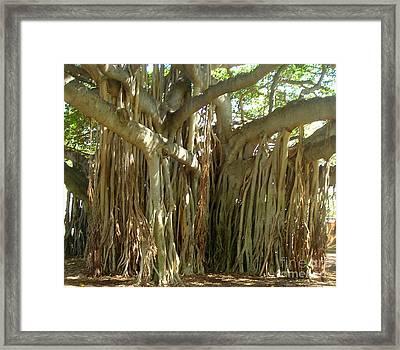 Hawaii Banyan Tree Framed Print