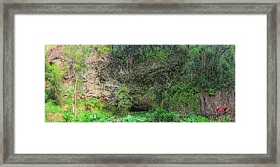 Hawaii Fern Grotto Framed Print by C H Apperson
