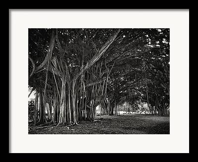 Dripping Vines Framed Prints