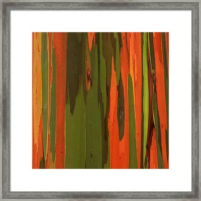 Hawaiian Eucalyptus Framed Print by James Eddy
