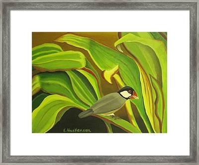 Hawaiian Finch On Tea Leaves Framed Print by Elaine Haakenson