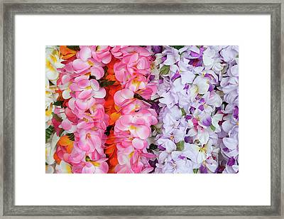 Hawaiian Flower Garlands Display Framed Print by Daisy Gilardini