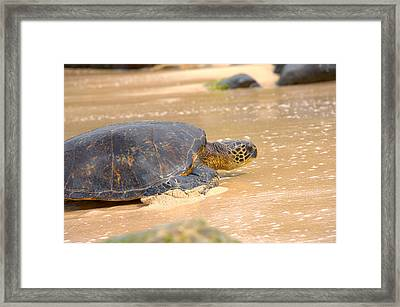 Hawaiian Green Sea Turtle 2 Framed Print by Brian Harig