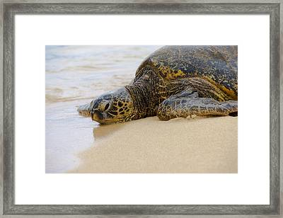 Hawaiian Green Sea Turtle 3 Framed Print by Brian Harig