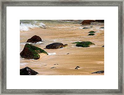 Hawaiian Green Sea Turtle Framed Print by Brian Harig