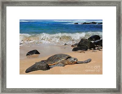 Hawaiian Green Sea Turtle Framed Print by Leslie Kirk