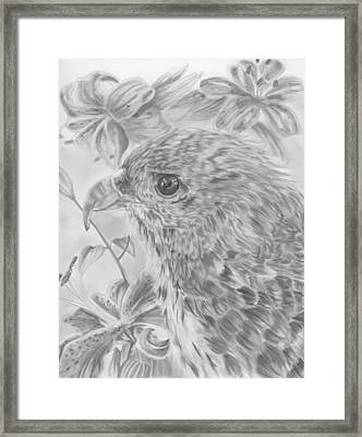 Hawaiian Hawk Framed Print by Raquel Ventura
