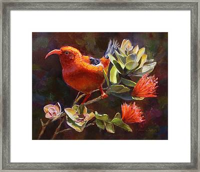 Hawaiian IIwi Bird And Ohia Lehua Flower Framed Print by Karen Whitworth