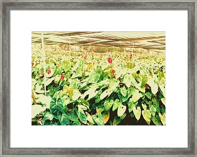 Hawii Flowers In Nursery Framed Print by Joan Shortridge