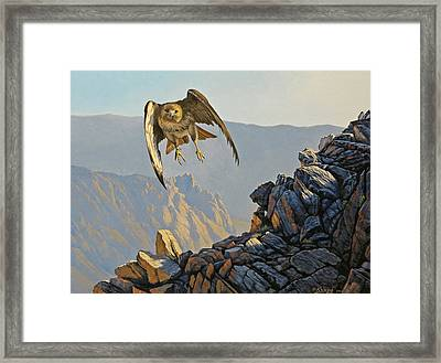 Hawk Above Beartooth Pass Framed Print by Paul Krapf