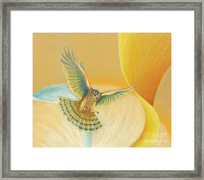 Hawk Above Framed Print