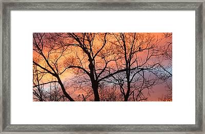 Hawk At Sunrise Framed Print