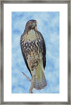 Hawk By Frank Lee Hawkins Framed Print