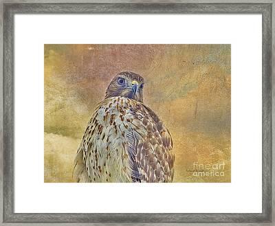 Hawk Energy Framed Print