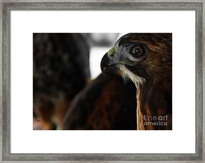 Hawk Eye Framed Print by Steven Digman