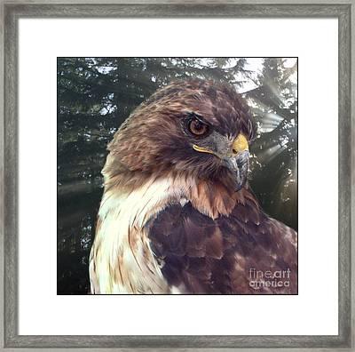 Hawk Eye - Wildlife Art Photography Framed Print by Ella Kaye Dickey
