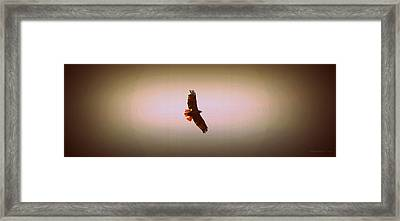 Hawk Eyes II Framed Print by Augustina Trejo