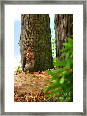Hawk Eyes Framed Print by Tap On Photo