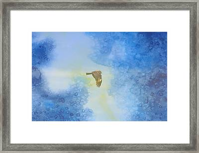Hawk In Flight 2 Framed Print