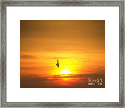 Framed Print featuring the photograph Hawk Into The Sunset by Jim Lepard