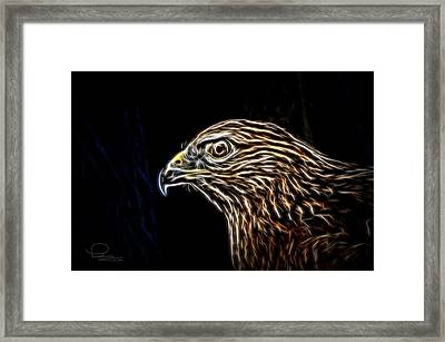 Hawk Framed Print by Ludwig Keck