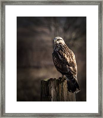 Hawk On A Post Framed Print