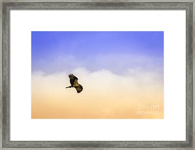 Hawk Over Head Framed Print